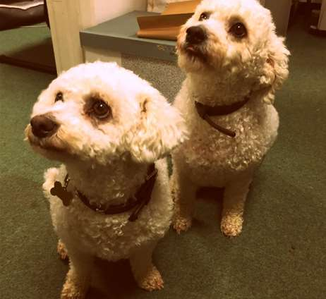 Toffee & Treacle Booth, Mascots